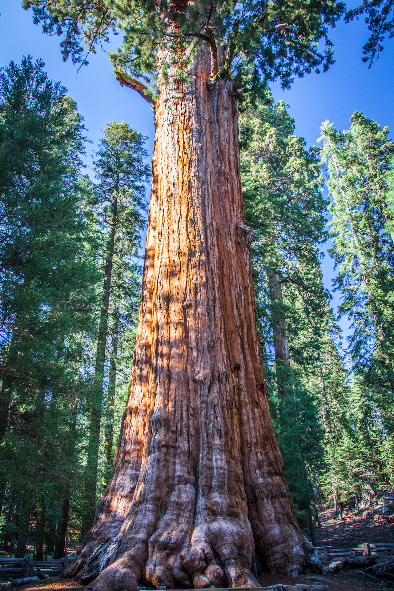 general sherman tree | Out West Again